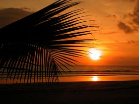 Topical Orange Sunset Palm Trees Leaves Beach